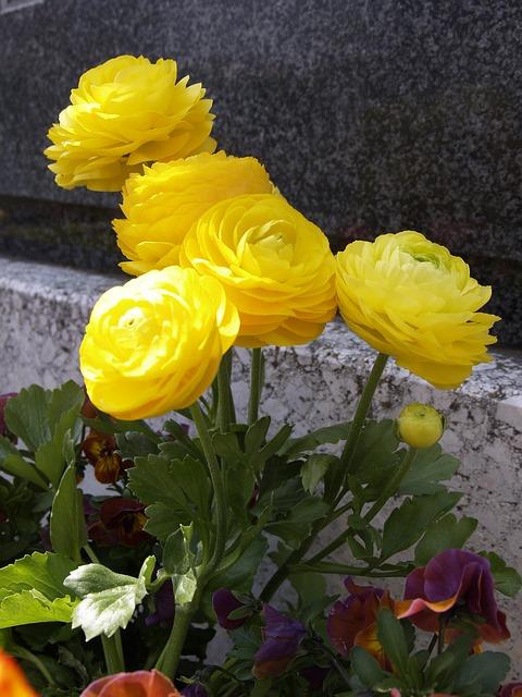 yellow-142872_640.jpg