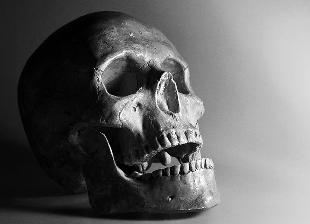 頭蓋骨.jpg