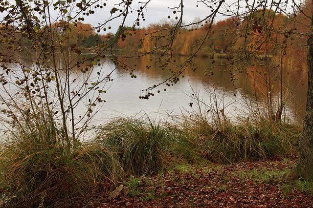 pond-215414_640.jpg