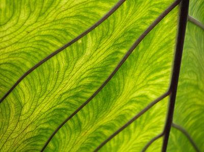 leaf4.jpg
