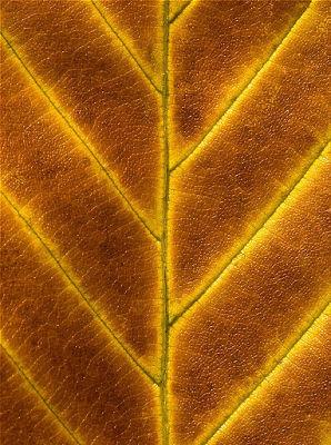 leafdead1.jpg