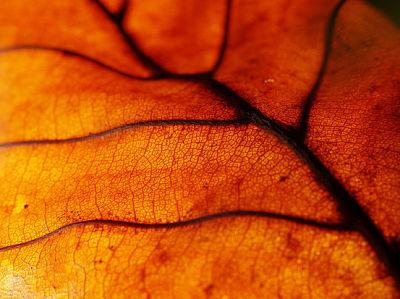 leafdead2.jpg