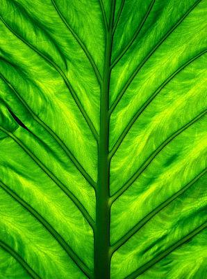 leafpeace.jpg